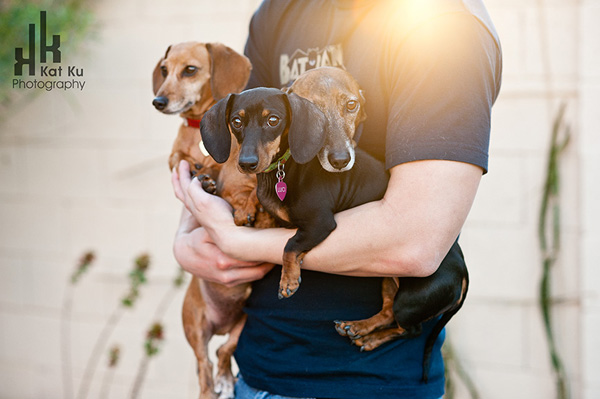 Dachshunds-1