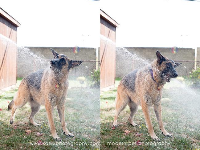 Detroit-Pet-Photographer_09
