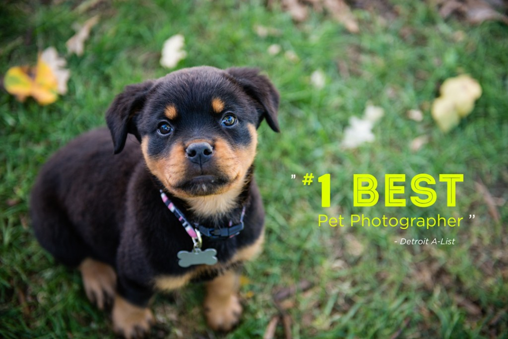 Kat Ku Photography - Gia Rottweiler Homepage