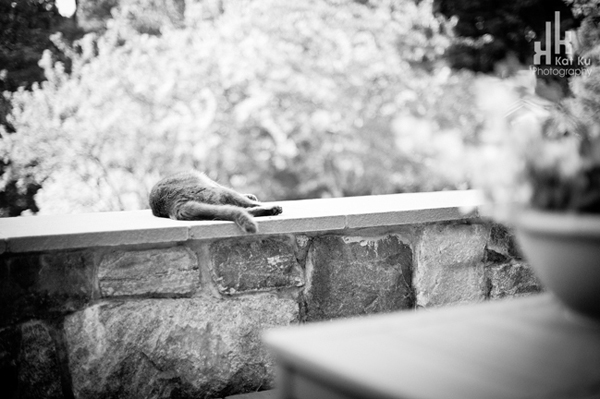 Lazy-cat-sunning