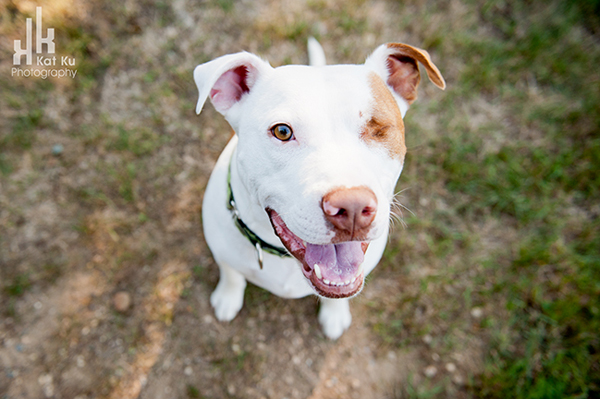 Michigan-Pet-Photography_Mellow-the-Pitbull_-07
