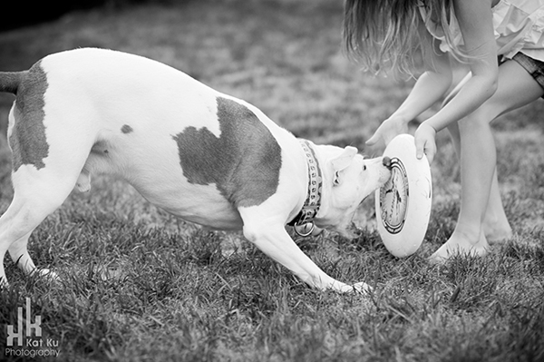 Michigan-Pet-Photography_Mellow-the-Pitbull_-30