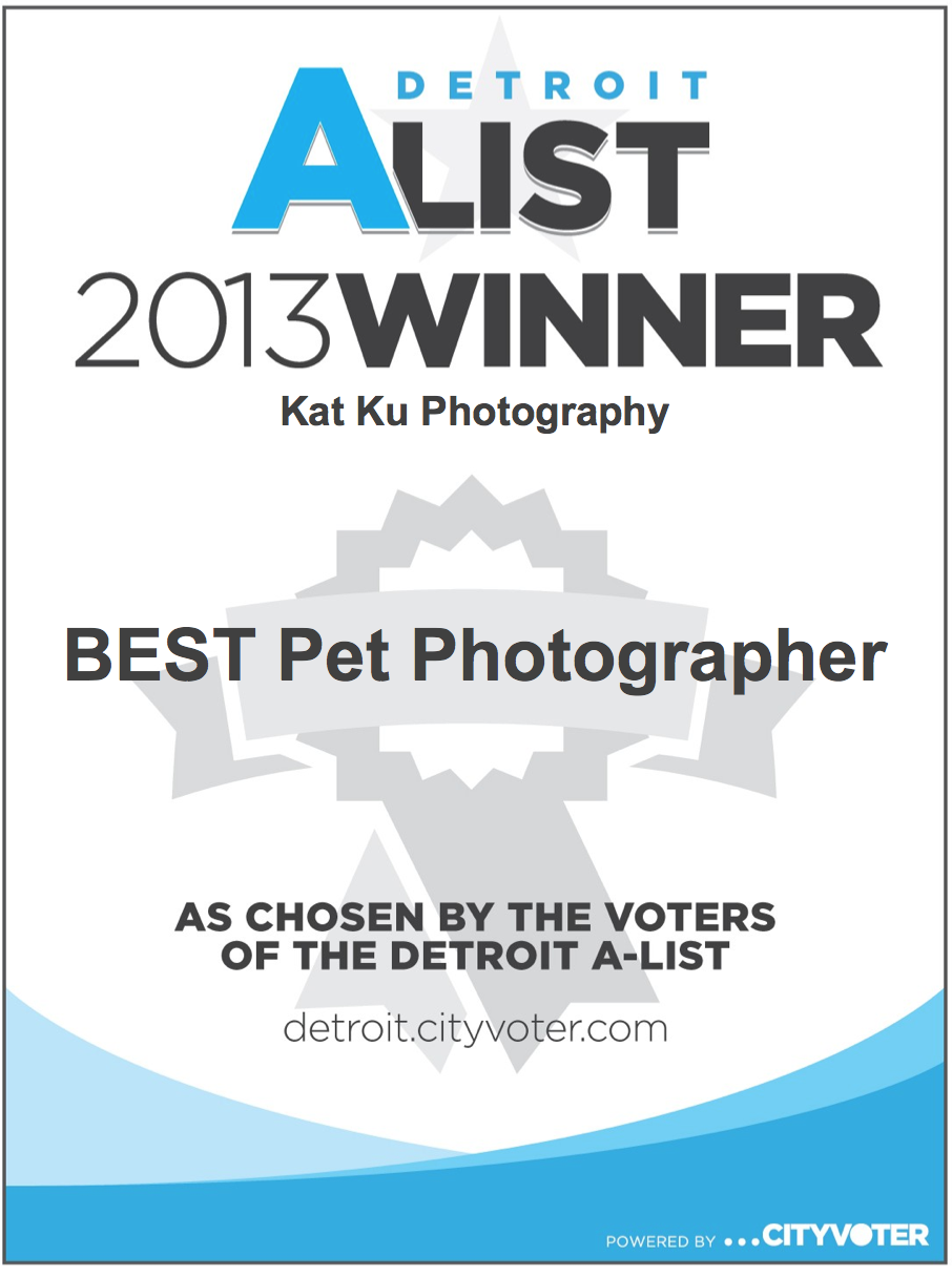 Detroit's Best Pet Photographer