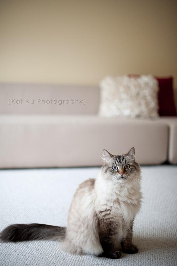 Shoko_Solemn-Cat_04
