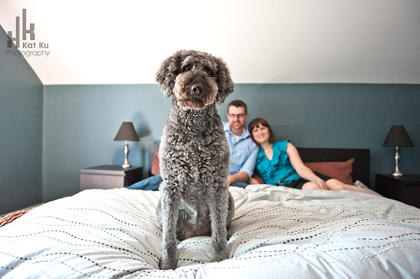 Ellie-the-Gray-Labradoodle_14