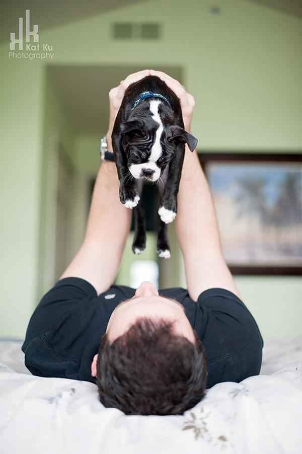 Kat-Ku-Photography_Boston-Terrier-Puppy18