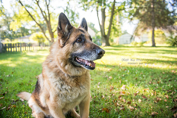 Mythos the German Shepherd_05