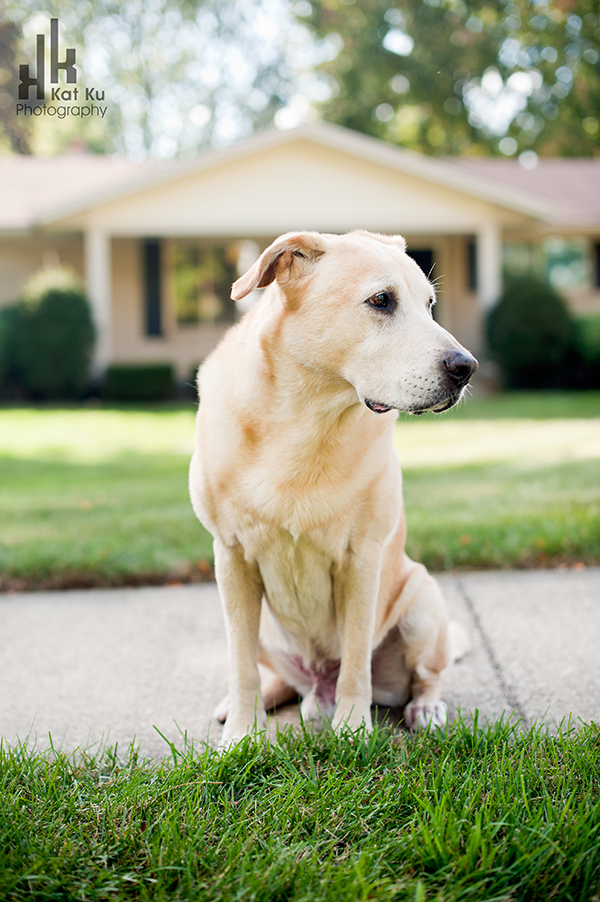 Rochester-Hills-Pet-Photography_02