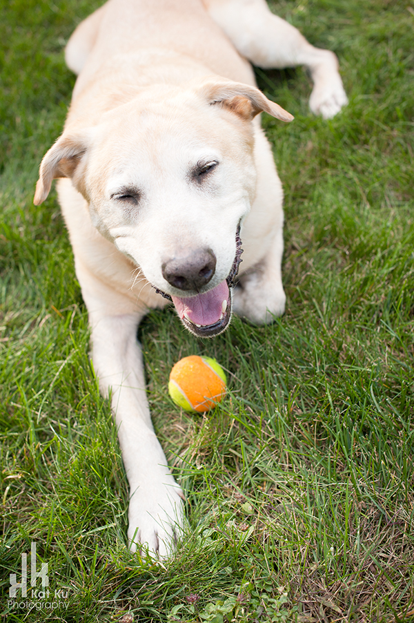 Rochester-Hills-Pet-Photography_09