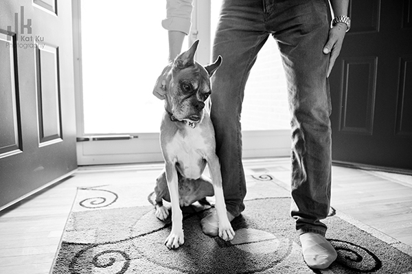 Sarah-the-Boxer_Modern-Pet-Photography_06