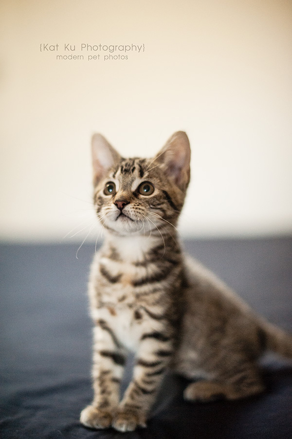 Adoptable Kittens_14