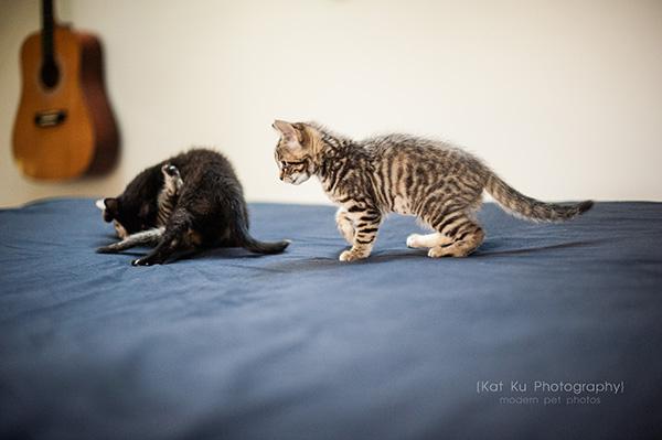 Adoptable Kittens_21