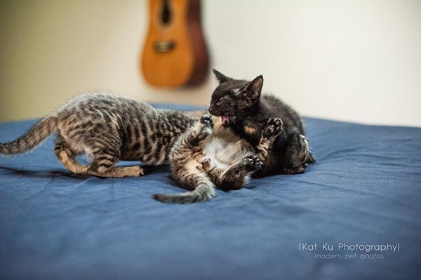 Adoptable Kittens_22