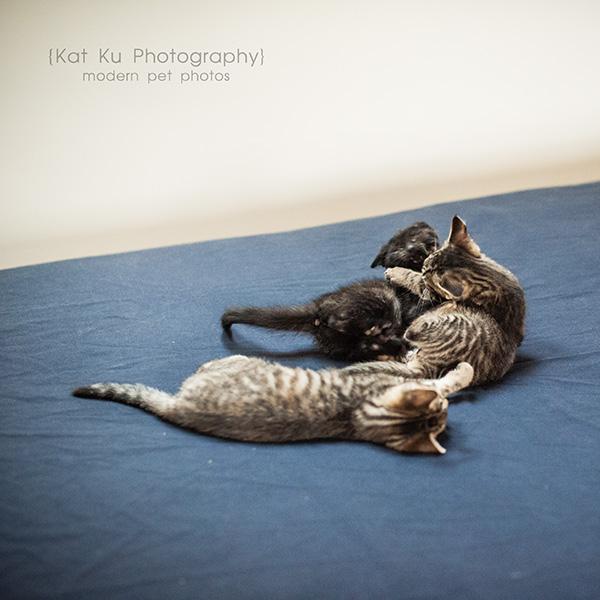 Adoptable Kittens_25