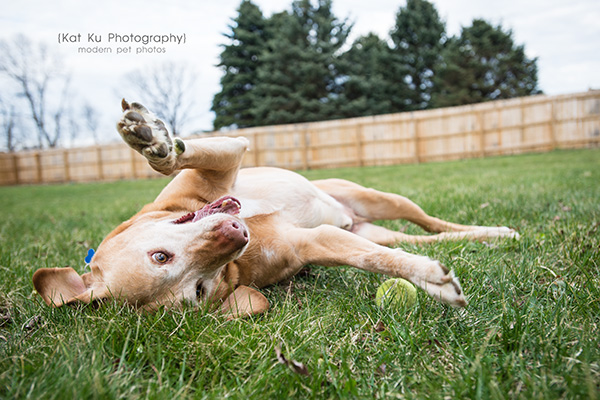 Kat Ku - Dexter Michigan Dog and Pet Photography_ 17
