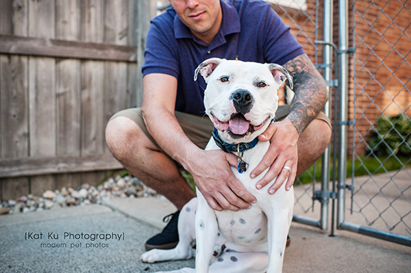 Kat Ku Michigan Pet Photography - Scrappy the White Pit Bull_02