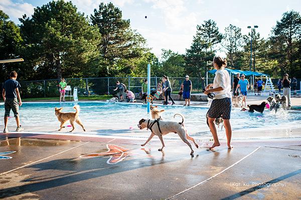 Kat Ku Photography_Ann Arbor Buhr Park_Dog Swim_01