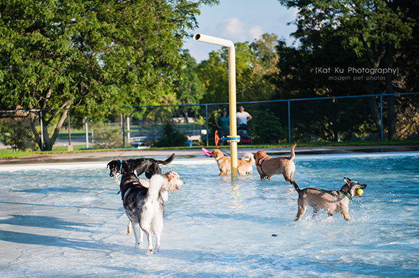 Kat Ku Photography_Ann Arbor Buhr Park_Dog Swim_02