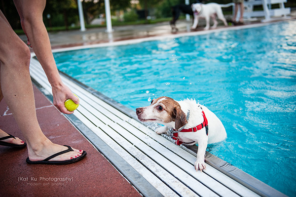 Kat Ku Photography_Ann Arbor Buhr Park_Dog Swim_08