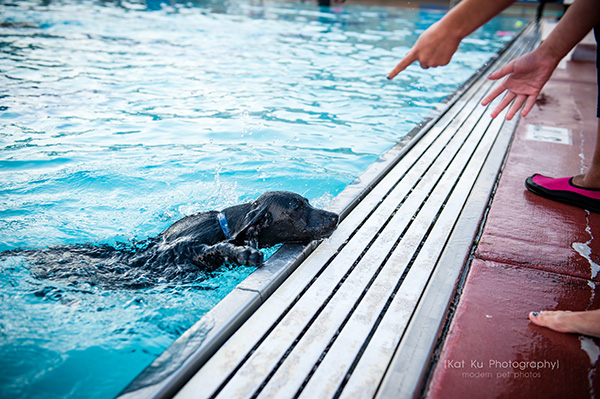 Kat Ku Photography_Ann Arbor Buhr Park_Dog Swim_13