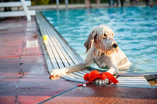 Kat Ku Photography_Ann Arbor Buhr Park_Dog Swim_15
