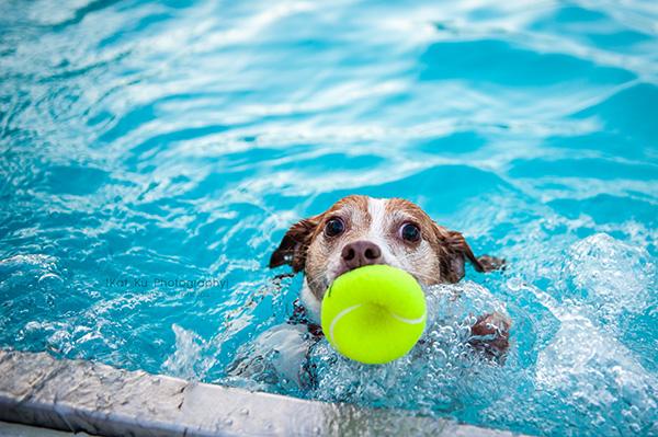 Kat Ku Photography_Ann Arbor Buhr Park_Dog Swim_24