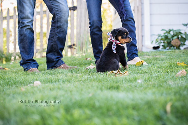 Kat Ku_Gia Rottweiler Puppy_08