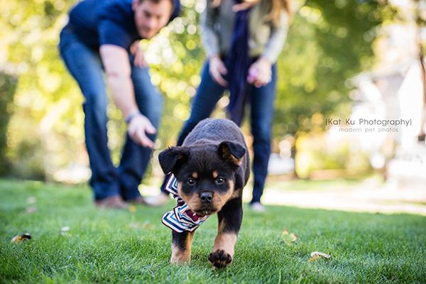 Kat Ku_Gia Rottweiler Puppy_10