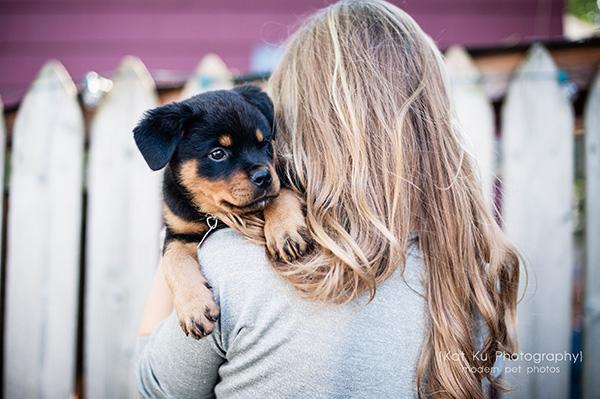 Kat Ku_Gia Rottweiler Puppy_17