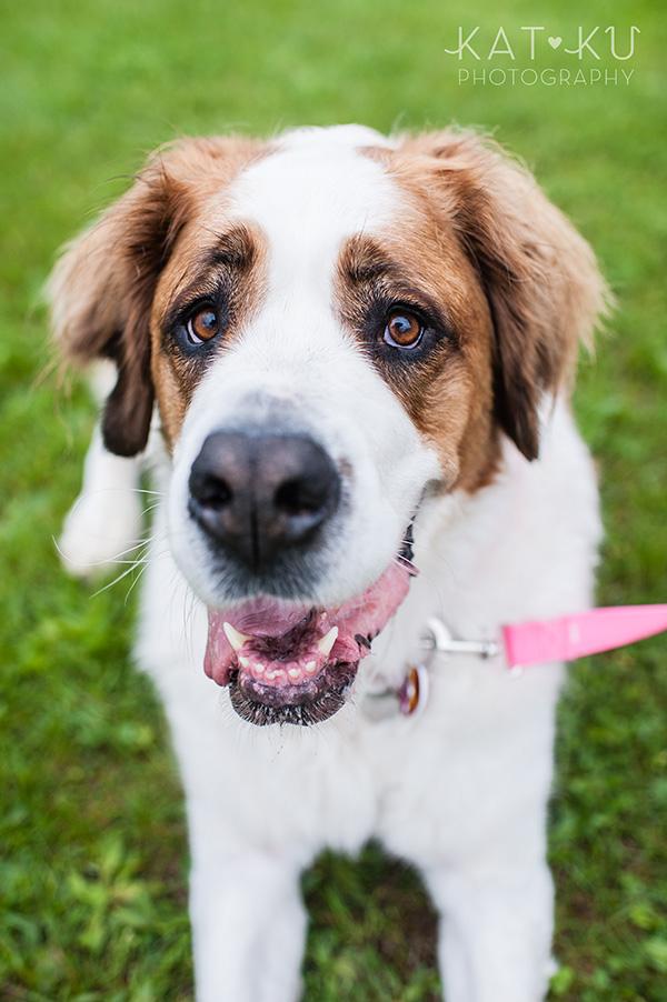 Kat Ku Pet Photography_Humane Society of Huron Valley_Walk and Wag_03
