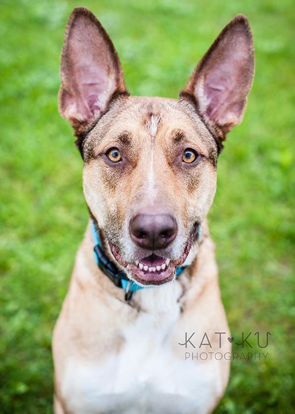 Kat Ku Pet Photography_Humane Society of Huron Valley_Walk and Wag_05