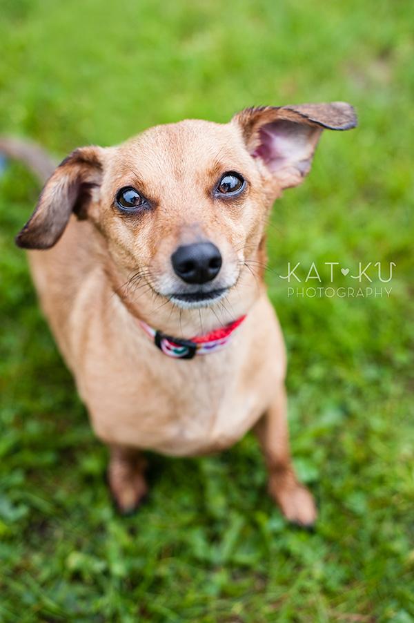 Kat Ku Pet Photography_Humane Society of Huron Valley_Walk and Wag_06