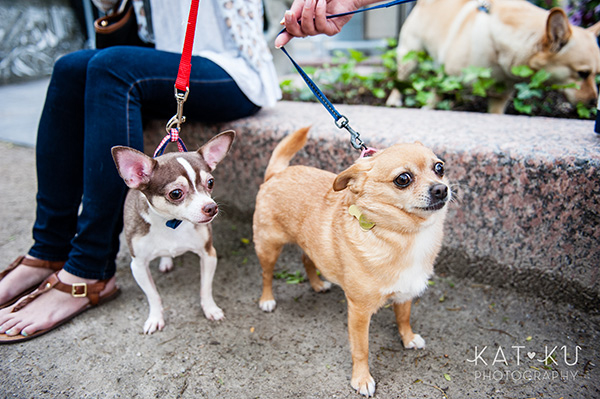 Kat Ku Photography_Dogs of Detroit_Campus Martius_04