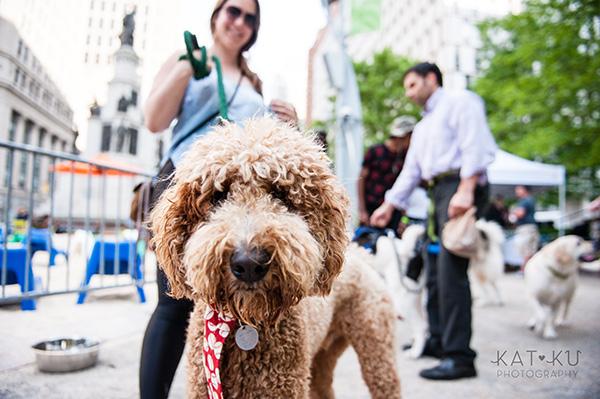 Kat Ku Photography_Dogs of Detroit_Campus Martius_06