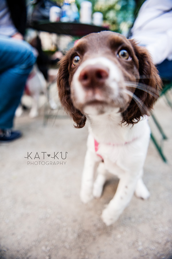 Kat Ku Photography_Dogs of Detroit_Campus Martius_09