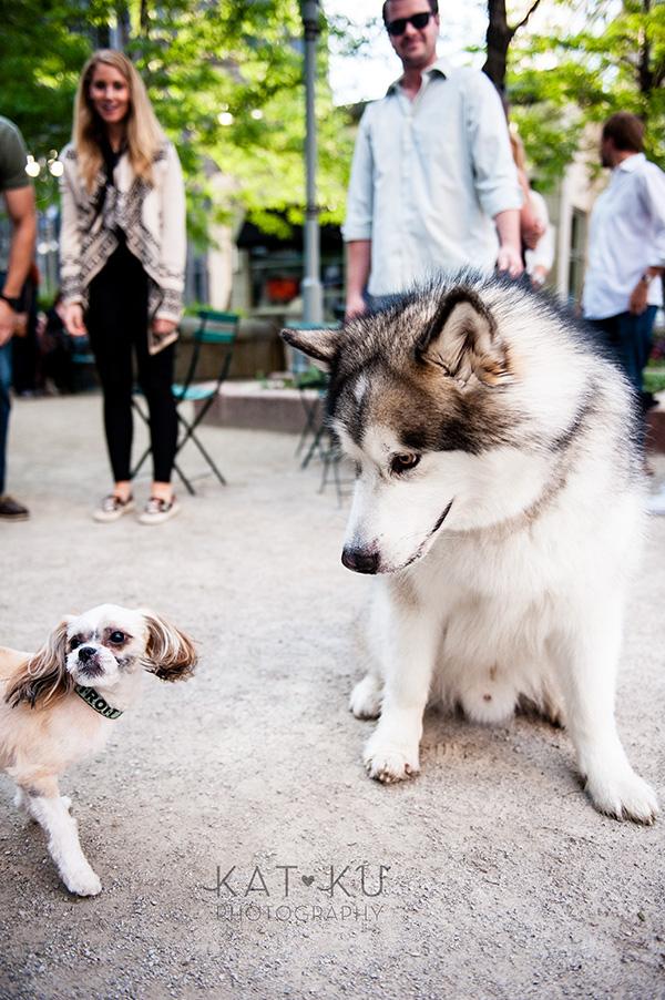Kat Ku Photography_Dogs of Detroit_Campus Martius_10
