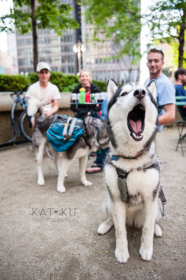Kat Ku Photography_Dogs of Detroit_Campus Martius_12
