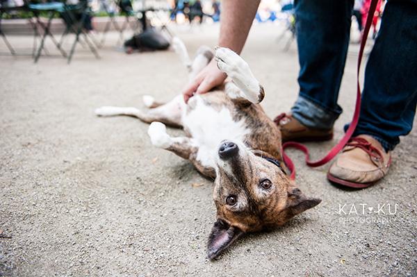 Kat Ku Photography_Dogs of Detroit_Campus Martius_13