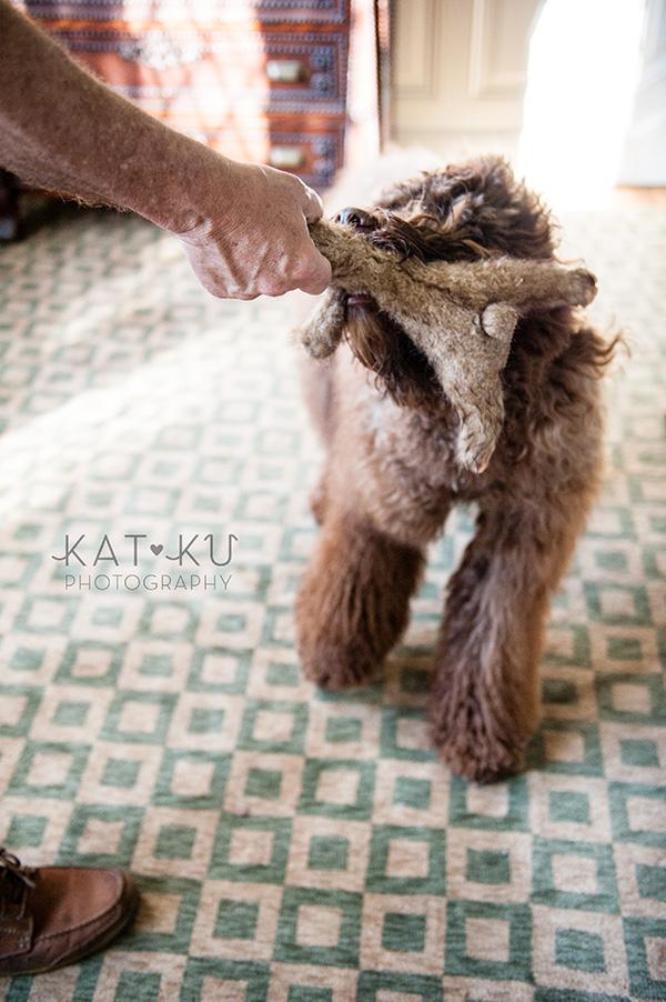 Kat Ku Photography_Ohio Dog_Cosmo_06