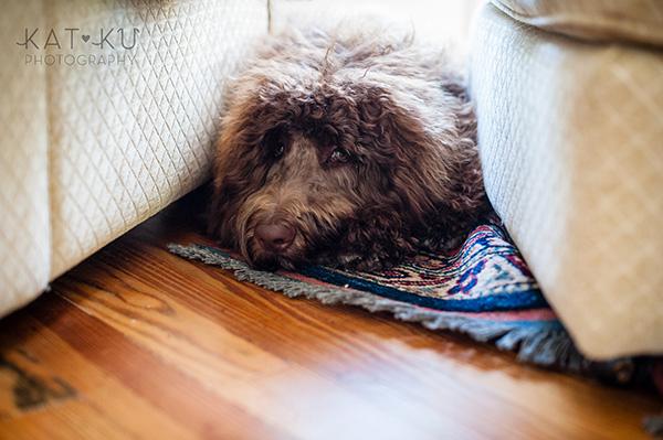 Kat Ku Photography_Ohio Dog_Cosmo_10