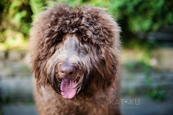 Kat Ku Photography_Ohio Dog_Cosmo_11