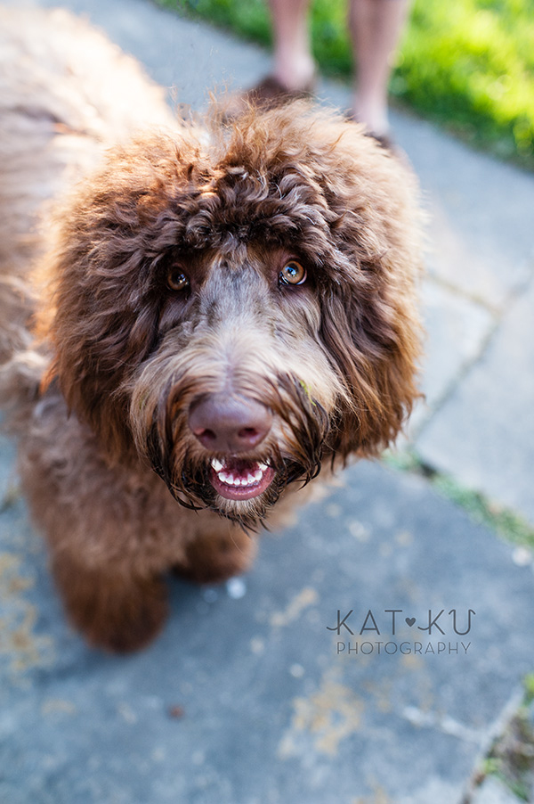 Kat Ku Photography_Ohio Dog_Cosmo_13