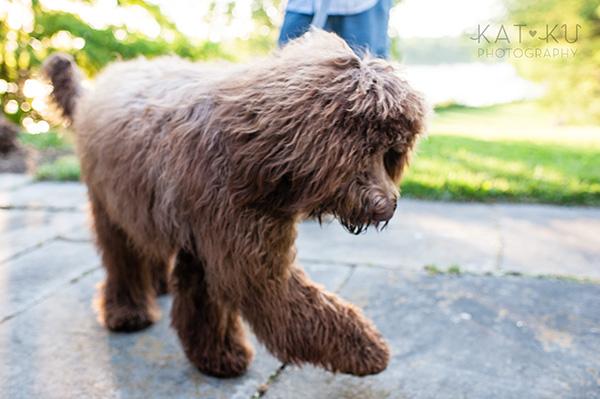 Kat Ku Photography_Ohio Dog_Cosmo_15
