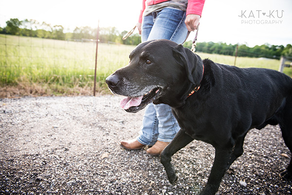Kat Ku_Tank the Black Lab_Novi Dog Photographer_16