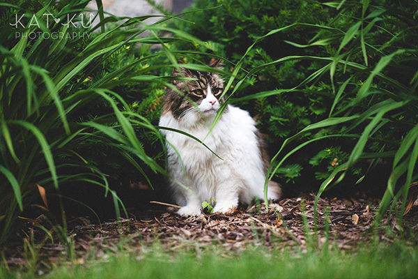 Kat Ku_Sunny_Cat Photography