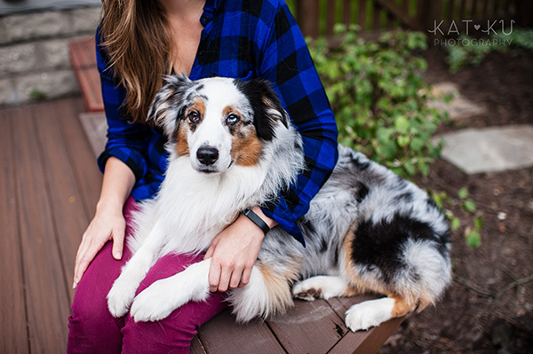 Kat Ku Photography - Ivan Australian Shepherd Royal Oak Michigan_12