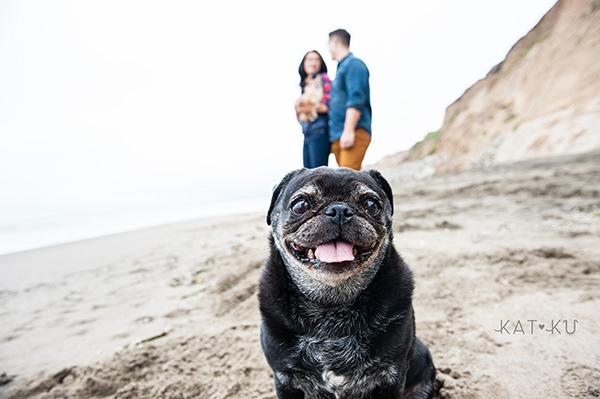 Kat Ku_San Francisco Pet Photos_Wheezy and Tito_22