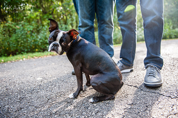 All Rights Reserved_Kat Ku_Franklin Boston Terrier_09