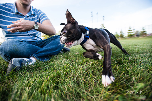 All Rights Reserved_Kat Ku_Franklin Boston Terrier_11