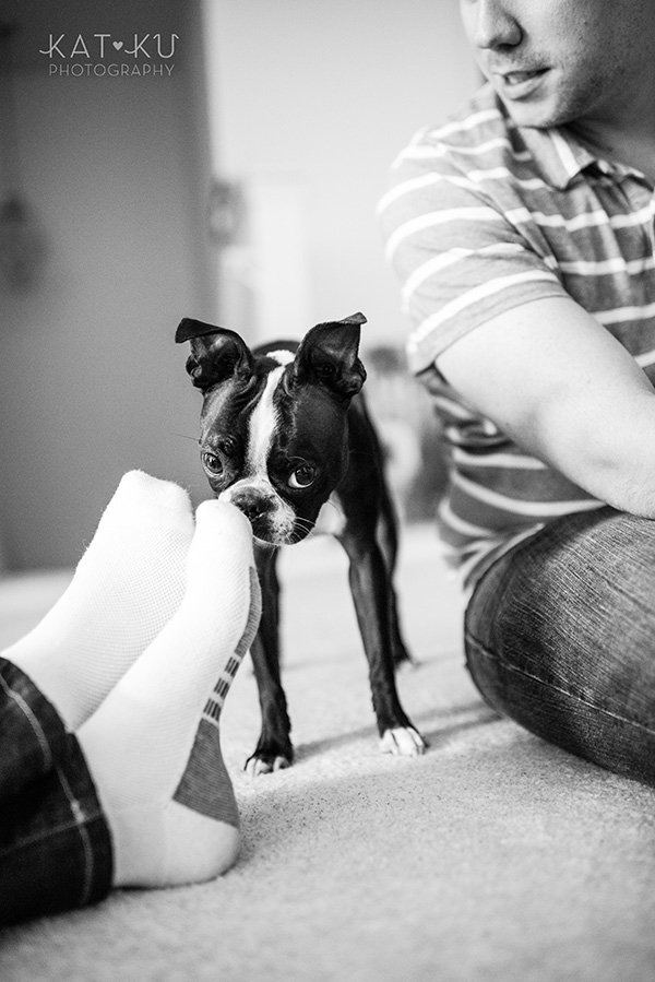 All Rights Reserved_Kat Ku_Franklin Boston Terrier_18